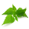 Nettle Leaves