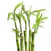 Bamboo Shoots or Bamboo Leaves